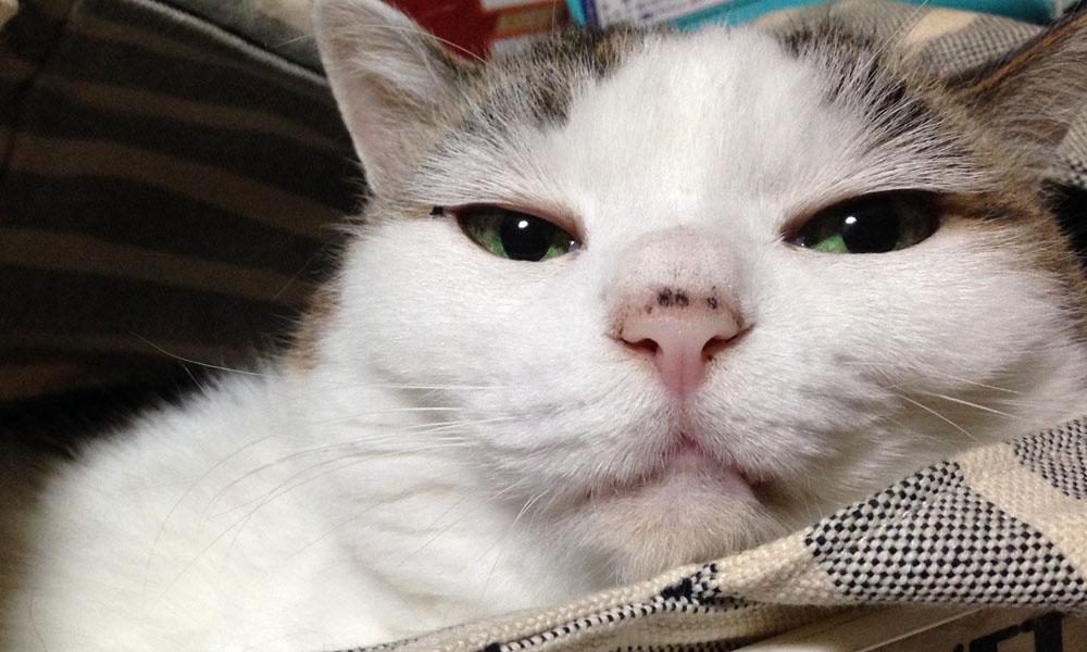 我が家の愛猫を紹介♪仕事がはかどる原動力
